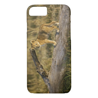 Coque iPhone 8/7 Petit animal de lion sur le rondin, Panthera Lion,
