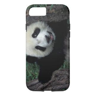 Coque iPhone 8/7 Petit animal de panda avec l'arbre, Wolong,