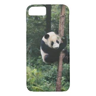 Coque iPhone 8/7 Petit animal de panda grimpant à l'arbre, Wolong,