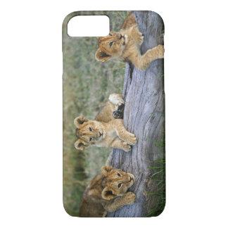 Coque iPhone 8/7 Petits animaux de lion sur le rondin, Panthera