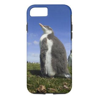 Coque iPhone 8/7 Pingouin de Gentoo, Pygoscelis Papouasie, avec
