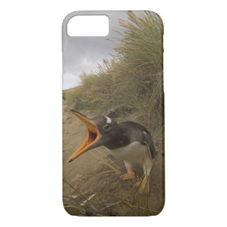 Coque iPhone 8/7 pingouin de gentoo, Pygoscelis Papouasie, sur le