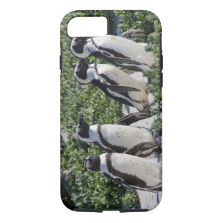 Coque iPhone 8/7 Pingouins africains, autrefois connus sous le nom