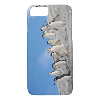 Coque iPhone 8/7 pingouins de jugulaire, Pygoscelis Antarctique,