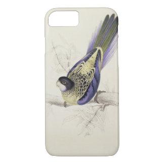 Coque iPhone 8/7 Platycercus Brownii, ou Parrakeet de Brown (plat 2