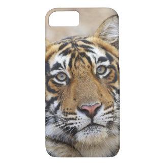 Coque iPhone 8/7 Portrait de tigre de Bengale royal, Ranthambhor