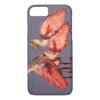Coque iPhone 8/7 Quatre spatules roses (ajaja d'Ajaia) à l'aube