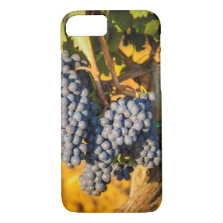 Coque iPhone 8/7 Raisins de Sangiovese dans un vignoble