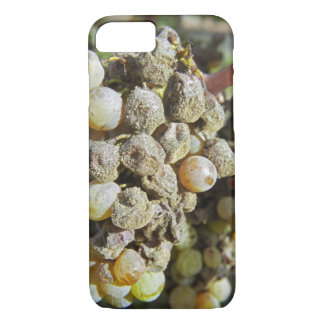 Coque iPhone 8/7 Raisins de Semillon avec la putréfaction noble. au