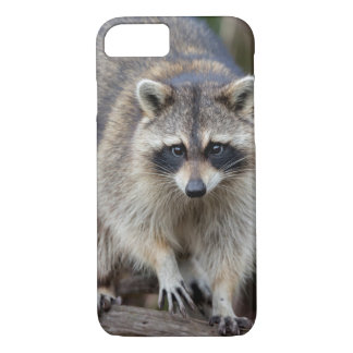 Coque iPhone 8/7 Raton laveur, lotor de Procyon, la Floride,