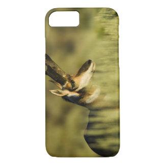 Coque iPhone 8/7 Refuge national d'antilope de montagne de cerf,