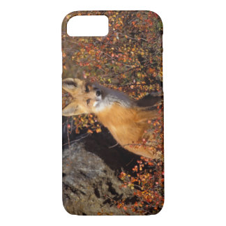 Coque iPhone 8/7 renard rouge, vulpes de Vulpes, dans des couleurs