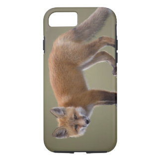 Coque iPhone 8/7 renard rouge, vulpes de Vulpes, le long du nord