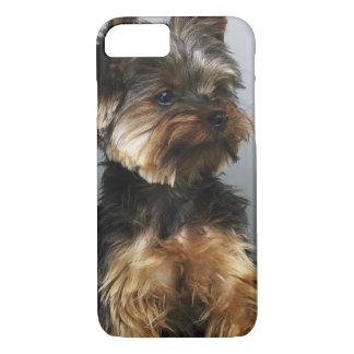 Coque iPhone 8/7 Terrier de Yorkshire, plan rapproché