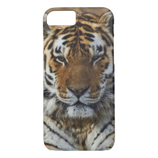 Coque iPhone 8/7 Tigre de Bengale, Panthera zoo du Tigre,