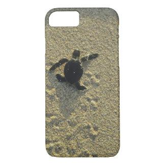Coque iPhone 8/7 Tortue verte, (mydas de Chelonia), hatchling