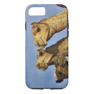 Coque iPhone 8/7 Trio des chameaux, marché de chameau, le Caire,