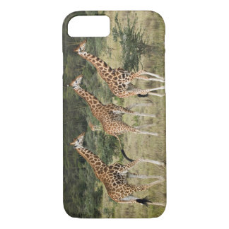 Coque iPhone 8/7 Trio des girafes de Rothschild, lac Nakuru