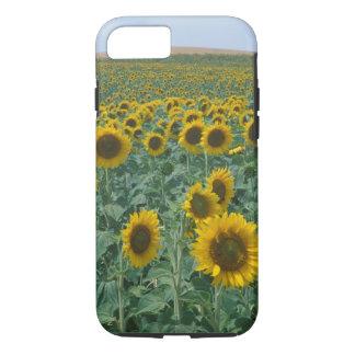 Coque iPhone 8/7 UE, France, Provence, gisement de tournesol