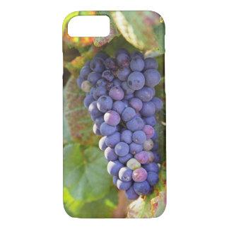 Coque iPhone 8/7 Un groupe de raisins de pinot noir dans un