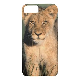Coque iPhone 8/7 Un petit animal de lion observe l'appareil-photo