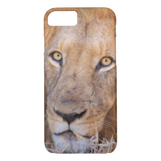Coque iPhone 8/7 Un portrait d'un lion