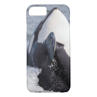 Coque iPhone 8/7 Violation de baleine d'orque