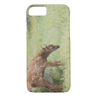 Coque iPhone 8/7 WY, parc national de Yellowstone, veau d'élans