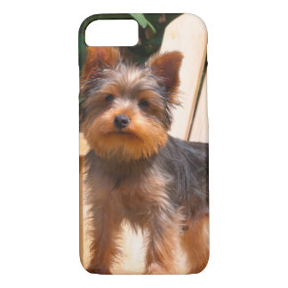 Coque iPhone 8/7 Yorkshire Terrier se tenant sur la chaise en bois