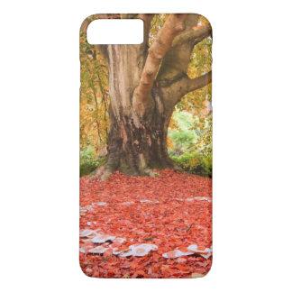 Coque iPhone 8 Plus/7 Plus Anneau féerique de belle d'automne nature