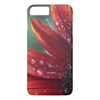 Coque iPhone 8 Plus/7 Plus Baisses rouges de pétales et de pluie de tournesol