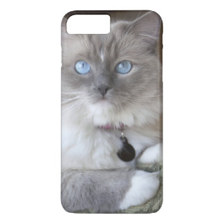 Coque iPhone 8 Plus/7 Plus Chat femelle de Ragdoll