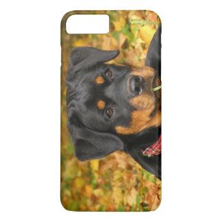 Coque iPhone 8 Plus/7 Plus Chiot de rottweiler se trouvant au sol dans la