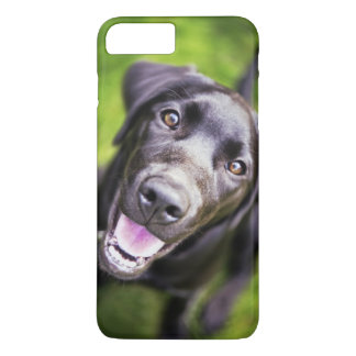 Coque iPhone 8 Plus/7 Plus Chiot noir de Labrador semblant ascendant, plan