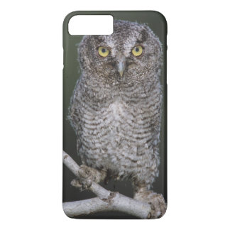 Coque iPhone 8 Plus/7 Plus Cri strident-Hibou oriental, asio de Megascops,