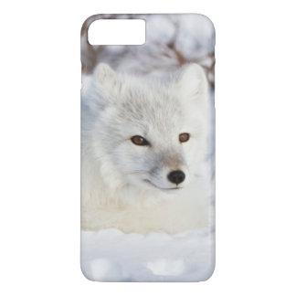 Coque iPhone 8 Plus/7 Plus Fox arctique en hiver
