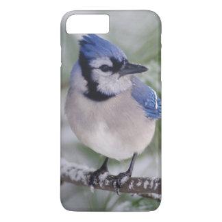 Coque iPhone 8 Plus/7 Plus Geai bleu, cristata de Cyanocitta