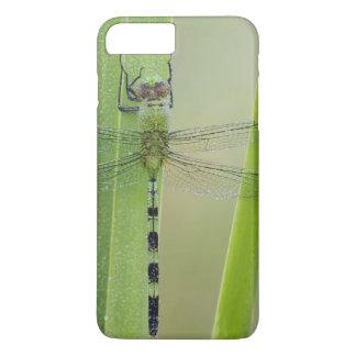 Coque iPhone 8 Plus/7 Plus Grand Pondhawk, vesiculosa d'Erythemis, adulte