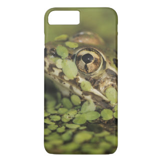 Coque iPhone 8 Plus/7 Plus Grenouille de léopard de Rio Grande, berlandieri