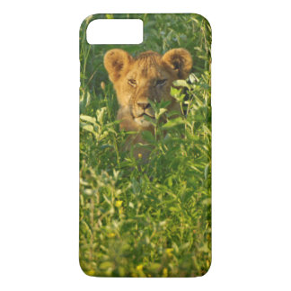 Coque iPhone 8 Plus/7 Plus Jeune lion (Panthera Lion) égrappant, Ngorongoro
