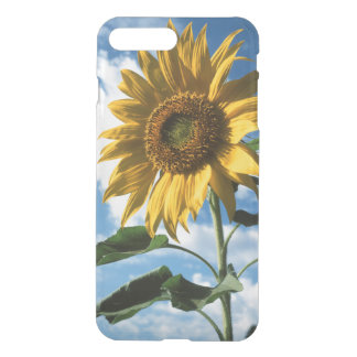 Coque iPhone 8 Plus/7 Plus La Californie, un tournesol gigantesque