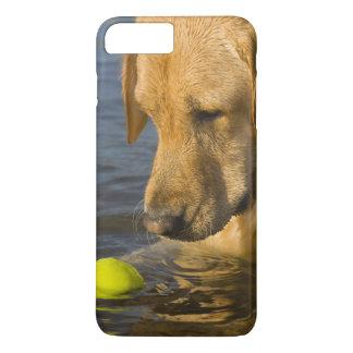 Coque iPhone 8 Plus/7 Plus Labrador jaune avec de la balle de tennis dans