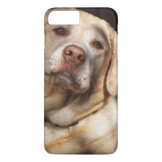 Coque iPhone 8 Plus/7 Plus Labrador retriever 2