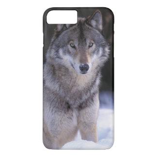 Coque iPhone 8 Plus/7 Plus L'Amérique du Nord, Canada, Canada oriental, loup
