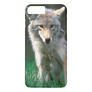 Coque iPhone 8 Plus/7 Plus Le Canada, Colombie-Britannique, coyote (latrans