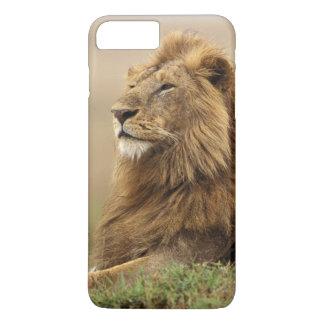 Coque iPhone 8 Plus/7 Plus Le Kenya, masai Mara. Lion de mâle adulte sur le