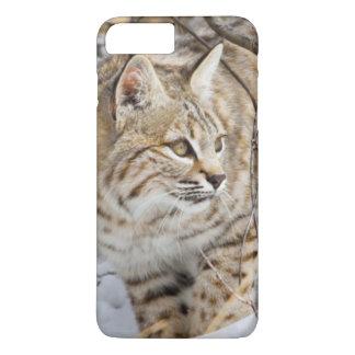 Coque iPhone 8 Plus/7 Plus Le Wyoming, le comté de Sublette, chat sauvage en