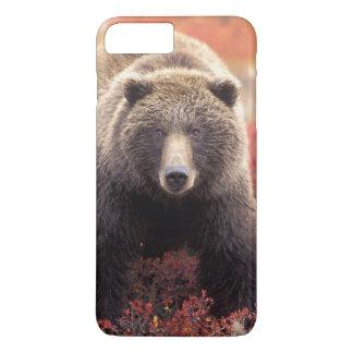 Coque iPhone 8 Plus/7 Plus Les Etats-Unis, Alaska, Denali NP, ours gris