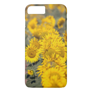 Coque iPhone 8 Plus/7 Plus Les Etats-Unis, le Kansas. Tournesols (helianthus