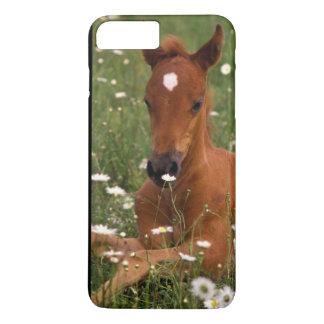 Coque iPhone 8 Plus/7 Plus Les Etats-Unis, Orégon, poney Arabe
